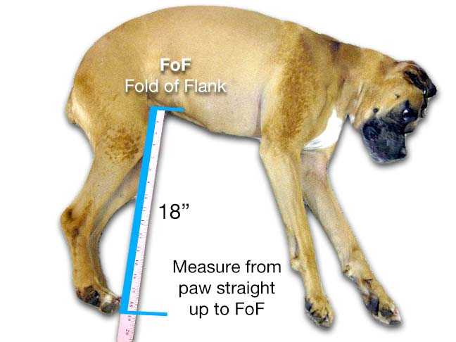 How to Measure Your Pet Fod of Flank
