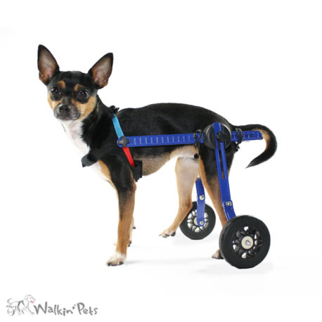 Mini Dog Wheelchair
