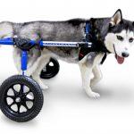 WheelchairImageHusky