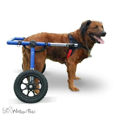 Large Walkin' Wheels 1