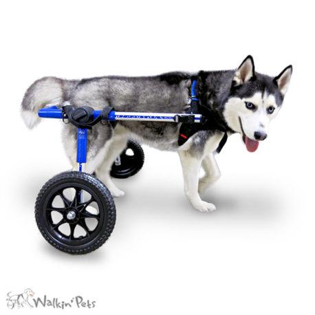 Medium Dog Wheelchair 1