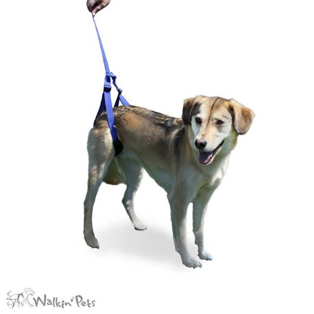 Rear Support Leash 1
