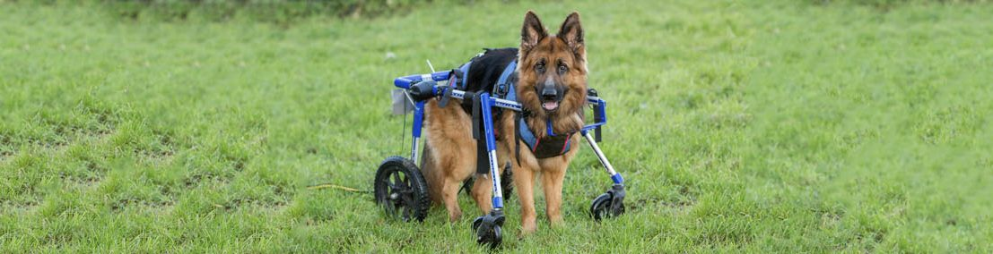Malachi in Combo Harness and Wheelchair