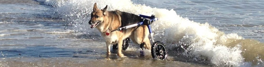 London in Walkin' Wheels at Beach