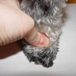 Measure Paw