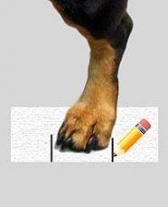 measure dog boots from walkin wheels