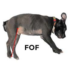 dog wheelchair Small fold of flank