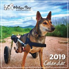 Walkin Wheels 2019 Calendar Cover