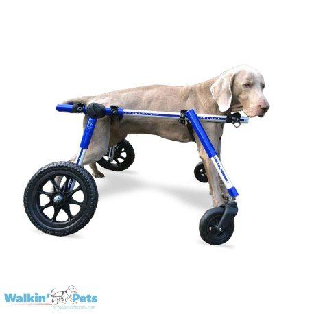 Medium Fully Supportive Dog Wheelchair Weimaraner