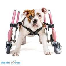 Small Front Attachment Dog Wheelchair